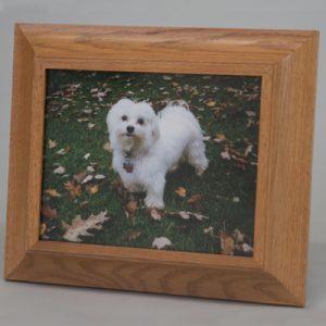 Wood Frame With White Dog Photo